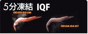 IQF桜えびについて